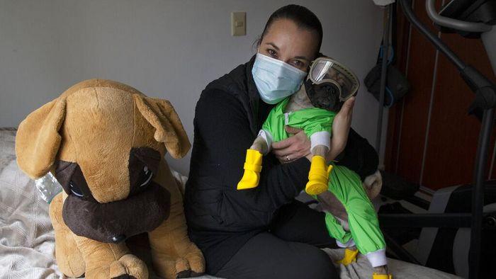 Tim medis merupakan garda terdepan dalam tanggulangi penyebaran virus Corona. Di Meksiko, seekor anjing pug diperbantukan untuk mengurangi stres para tim medis.