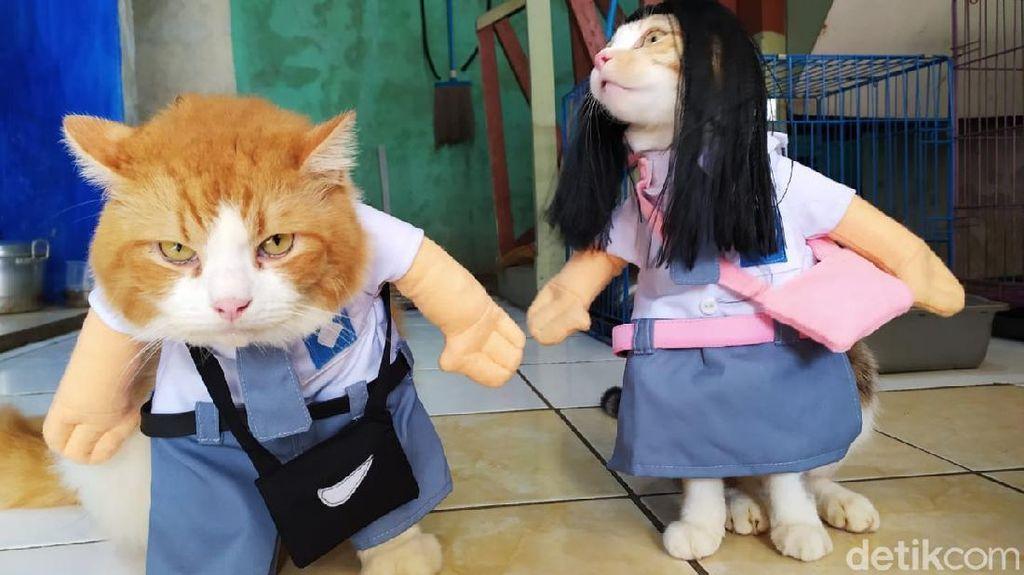 Lucunya Baju Kucing Buatan Pria Asal Cirebon Ini