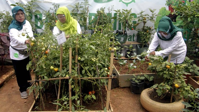 Kelompok Wanita Tani (KWT) Bina Lestari di Kampung Malang Nengah Purwakarta panen sayur. Mereka mendapat edukasi memanfaatkan pekarangan rumah dari Ewindo.
