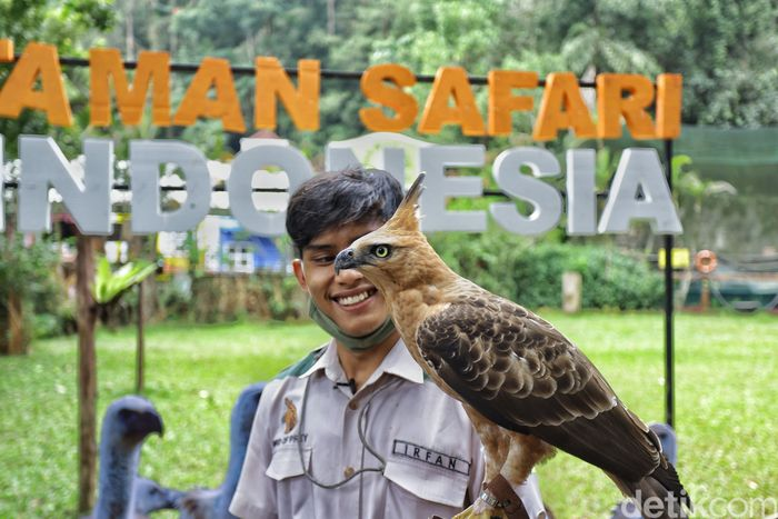 penjaga satwa taman safari bogor