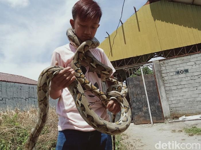 Dimas, bocah ABG kolektor ular piton di Klaten, Selasa (15/9/2020).