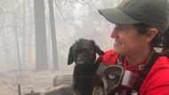 Haru, Anak Anjing Ditemukan Selamat dari Kebakaran Hutan California