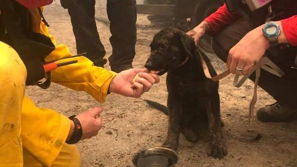 Pihak berwenang setempat mengatakan, penemuan anak anjing ini merupakan berita bahagia yang tak terduga. (Butte County Sheriff)