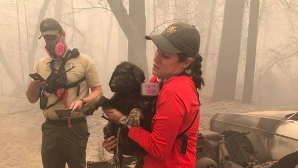 Setelah ditemukan, anjing ini dibawa ke Pusat Kedokteran Hewan di Chico, California untuk mendapatkan perawatan. (Butte County Sheriff)