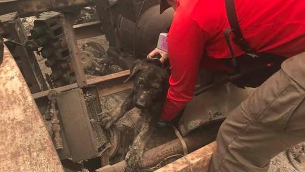 Seekor anak anjing ditemukan dalam kebakaran yang melanda California. Dia mengalami luka bakar yang ringan. (Butte County Sheriff)