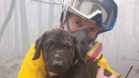 Kebakaran di California telah menewaskan 24 orang sejak api yang berkobar di hutan sejak 15 Agustus 2020. Ternyata korbannya tak hanya manusia, melainkan anak anjing. (Butte County Sheriff)