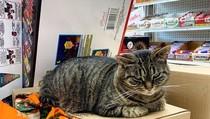 Potret Kucing Jalanan yang Juga Bisa Imut