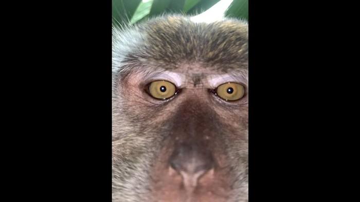Monyet Selfie dengan iPhone X