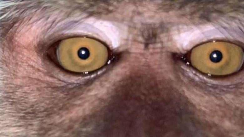 Selfie monyet.