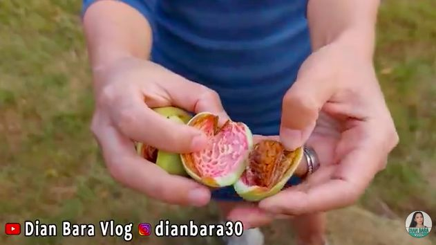 Panen almond