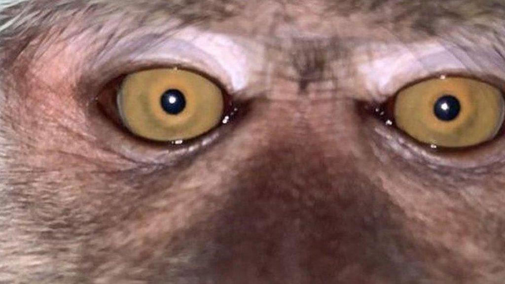 Pria Malaysia Temukan Selfie Monyet dalam Ponsel yang Hilang di Hutan