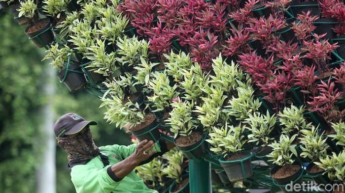 Pemprov DKI Jakarta menganggarkan dana hingga Rp 115,4 miliar untuk belanja tanaman. Rencana belanja tanaman itu diketahui akan dieksekusi pada tahun 2020.