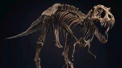 Kerangka Dinosaurus Berusia 60 Juta Tahun Dilelang, Siapa Mau?