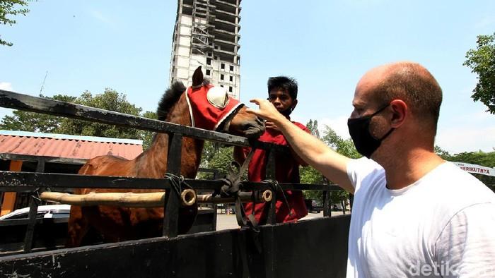 Kuda Jantan bernama Tedi kini dititipkan ke kebun binatang di Solo. Sebelumnya, kuda delman itu dibeli pengusaha Denmark dalam kondisi terluka di bagian perut.