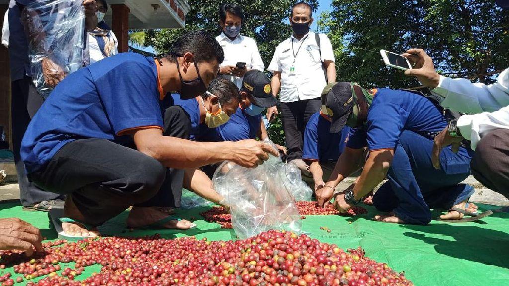 Upaya Kementan Dorong Petani di Lumajang Tingkatkan Kualitas Kopi