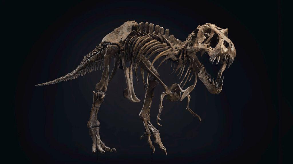 Ngeri! 2,5 Miliar T. rex Pernah Jelajahi Bumi Jutaan Tahun yang Lalu