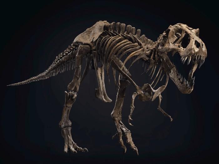 kerangka T-rex dilelang