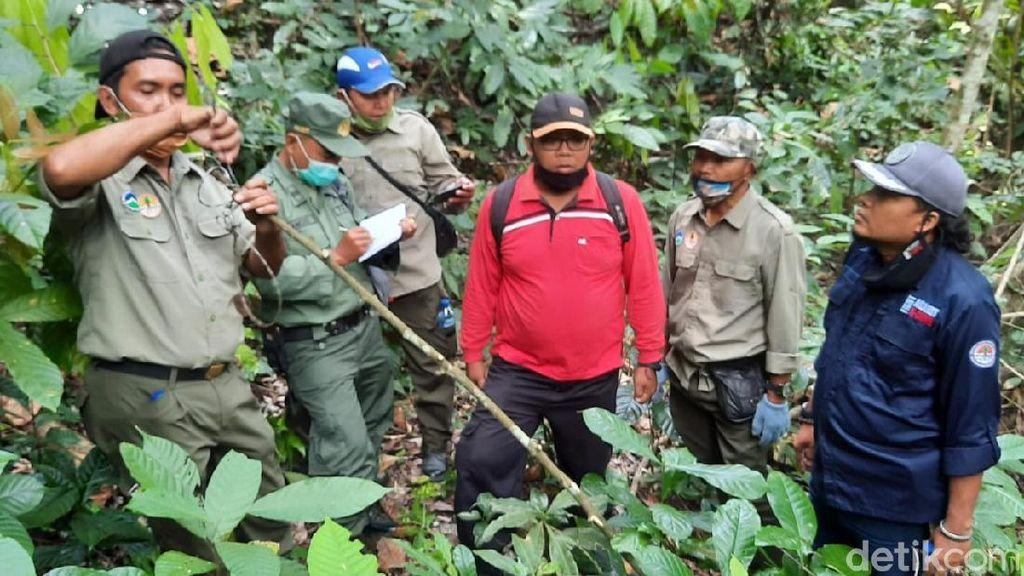 KLHK Temukan 6 Jebakan Binatang di Perbatasan TN Meru Betiri Banyuwangi