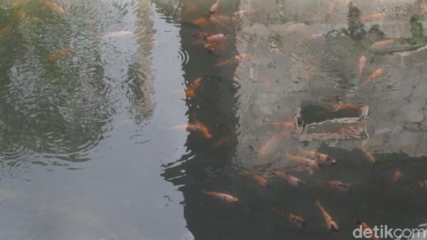 Salah satunya adalah Saefulloh. Warga Dusun Bitingan ini mengatakan, ada 15 kolam ikan air tawar milik warga di daerahnya. Semua menggunakan air hangat.