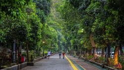 Kebun Raya Bogor, Wisata Hijau yang Sudah Bisa Dikunjungi