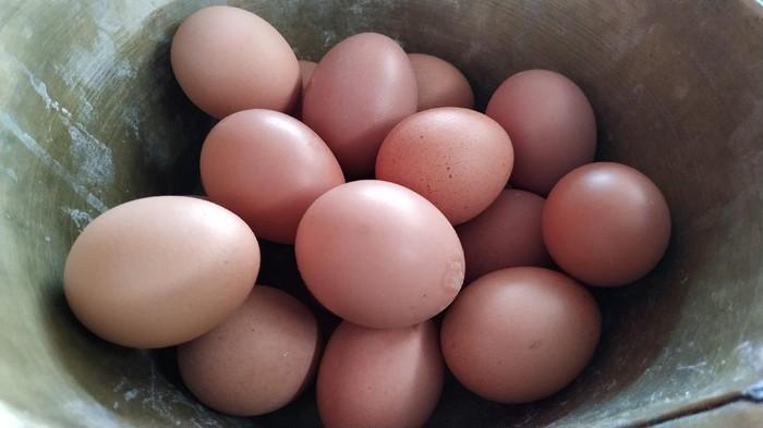 Telur ayam kualitas grade A langka