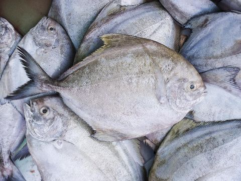 Ikan Bawal Bakar Spesial