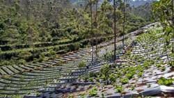 Sukaluyu, Kampung Berkebun di Atap Bandung