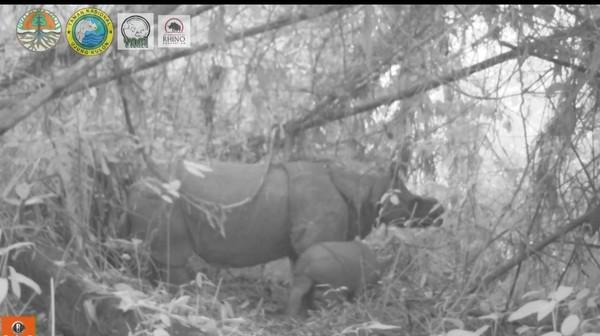Pada September tahun lalu, dua badak dilahirkan di taman ini. Sehingga menambah populasi badang menjadi 74 individu. (dok KLHK)