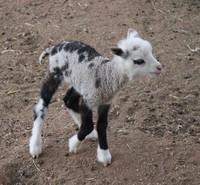 Hewan hybrid ternyata benar-benar ada. Berikut ini adalah beberapa contohnya di dunia nyata. Siap-siap terkejut ya, detikers.
