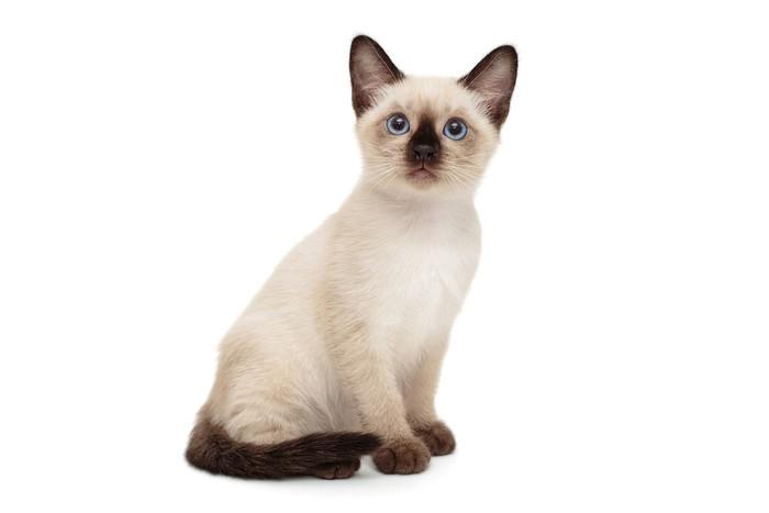 15 Jenis Kucing Peliharaan Yang Populer Menggemaskan Dan Mudah Dirawat