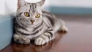 Tingkah Kucing Salah Naik Eskalator, Eh Viral