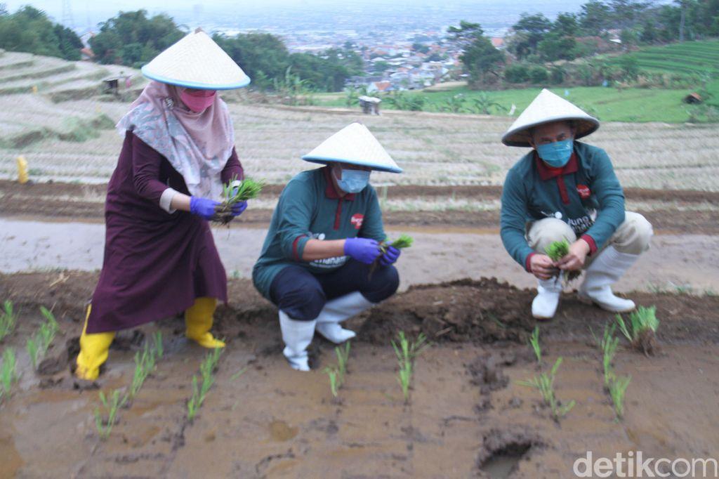UPT Pembibitan Tanaman Pangan, Hortikultura, dan Peternakan Kota Bandung