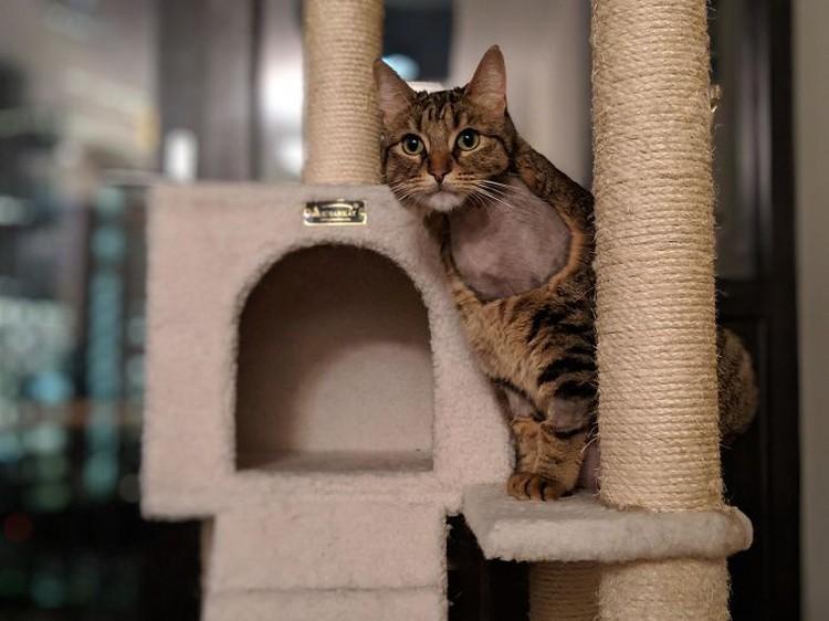 fotoinet funny cat haircut