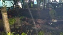 Mobil Minibus Tertimpa Pohon di Menteng, Tak Ada korban Jiwa