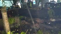 Video Mobil Minibus Hancur Tertimpa Pohon Tumbang di Jakpus
