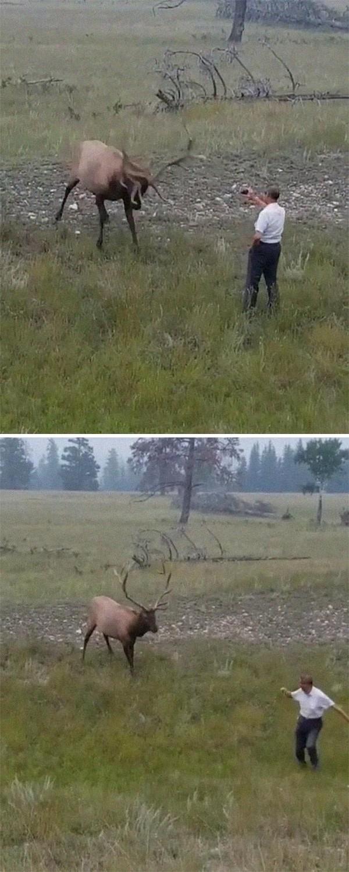 Wah Pak, gunakan fitur zoom saja. Tidak perlu jarak dekat seperti ini mengambil foto hewan liarnya. Dikejar-kejar deh.