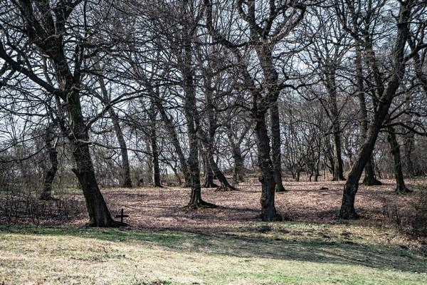 Hutan ini terletak di dekat Kota Cluj-Napoca, Transylvania dengan luas 250 hektar. (Getty Images/iStockphoto)