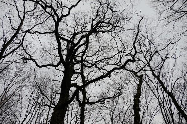 Hutan ini disebut sebagai kerajaan iblis di dunia karena sangat misterius. (Getty Images/iStockphoto)
