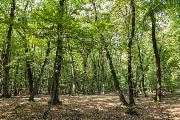 Semenjak itu kemistisan hutan ini makin menjadi-jadi. (Getty Images/iStockphoto)