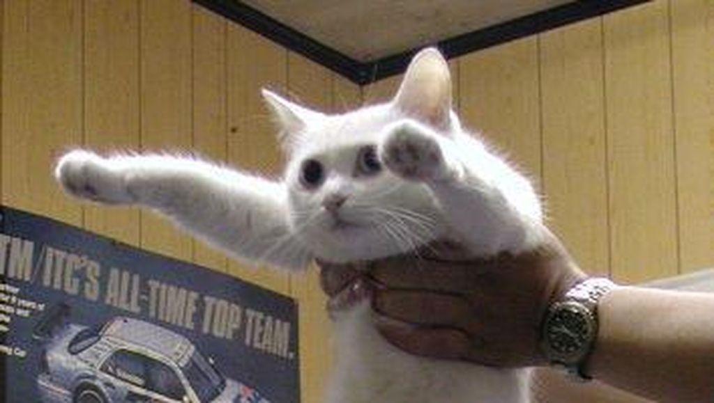 Nobiko, Kucing di Balik Meme Longcat Meninggal Dunia