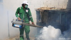 Dinkes Boyolali Ternak Nyamuk Wolbachia di Tengah Ancaman DBD