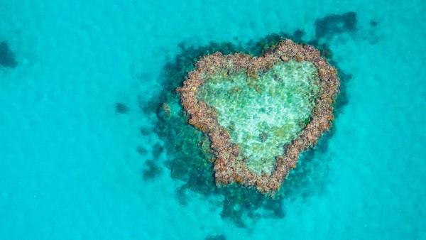 Sejak pertama kali ditemukan pada tahun 1975 atau sekitar 45 tahun lalu, Heart Reef menjadi area terlarang untuk dikunjungi wisatawan. Wisatawan dilarang untuk berenang dan menyelam di dekat Heart Reef. (Getty Images/iStockphoto/Andrew Robins)