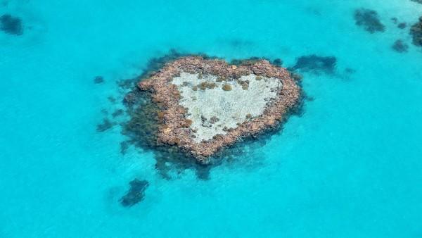 Untuk bisa menikmati keindahan Heart Reef dari dekat, traveler harus siap merogoh kocek yang agak dalam. Biayanya mencapai 1.100 dolar Australia atau setara dengan Rp 12 jutaan per orang. Traveler akan diajak naik perahu kecil berlantai kaca, kemudian perahu tersebut akan dibawa mendekat ke Heart Reef. (Getty Images/iStockphoto/Maerie)