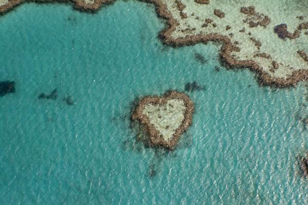 Heart Reef telah menjadi ikon Great Barrier Reef dan kamu biasanya hanya dapat melihatnya saat terbang dari Pulau Hamilton atau Proserpine. Terumbu karang ini bagian dari Hardy Reef, di terumbu luar yang sangat jauh dari Kepulauan Whitsunday yang lebih mudah diakses. Untuk melihatnya kamu bisa menggunakan jasa tur helikopter ke ponton pribadi yang ditambatkan di sebelah Heart Reef. (Getty Images/iStockphoto/LucienHarris)