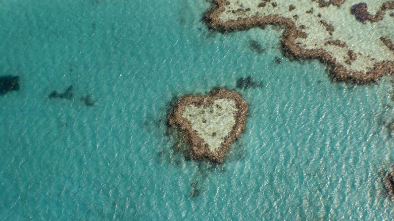 Birds eye view of Heart shaped reef on the great barrier reef
