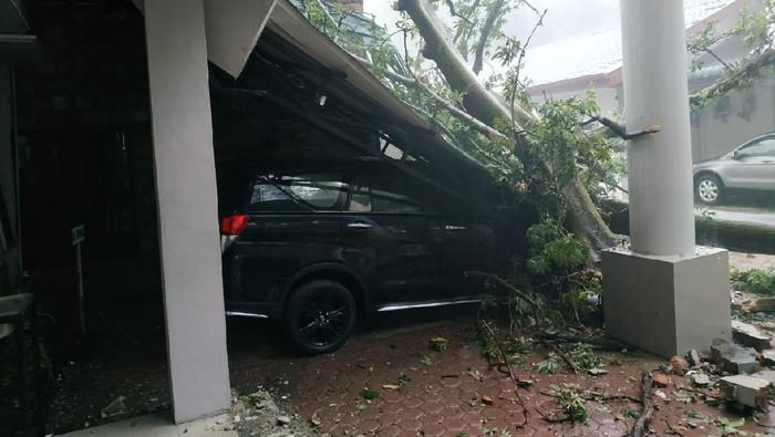 Pohon tumbang di Kantor BKSDA Medan (dok. Istimewa)