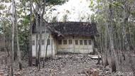 Menengok Rumah Tua di Tengah Kebun Jati Gunungkidul yang Viral