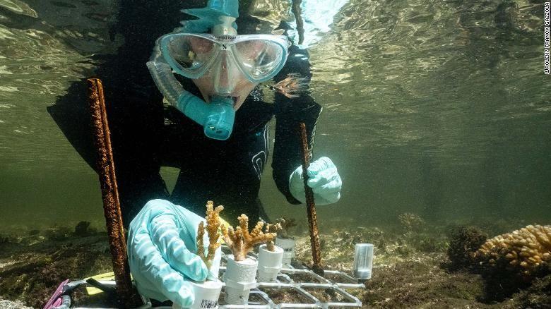 Terumbu karang dan karang bakau