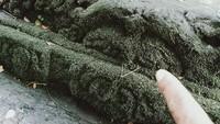 Ukuran bebatuan itu paling kecil panjang sekitar 30 cm dan paling besar panjang 80 cm. Ada yang polos, bertakik, berbentuk leter L, yoni atau memiliki ornamen. Beberapa batu kemuncak candi berbentuk kelopak bunga terlihat jelas terpasang di fondasi.