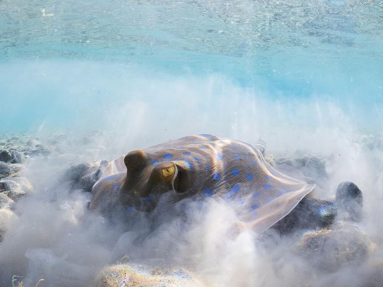 Jawara Underwater Photographs Of The Year 2020
